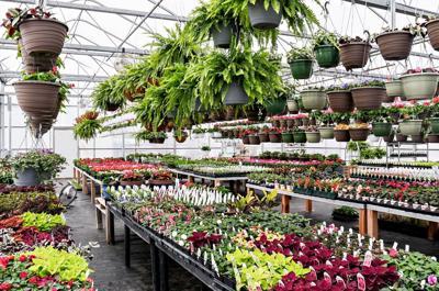 Zandstra Family Greenhouse