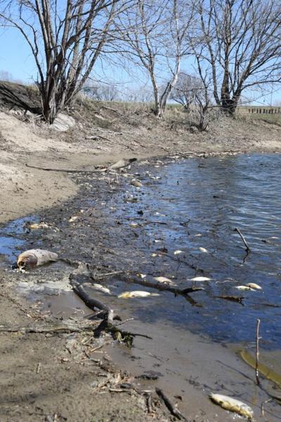 Alton Roadside Park fish kill