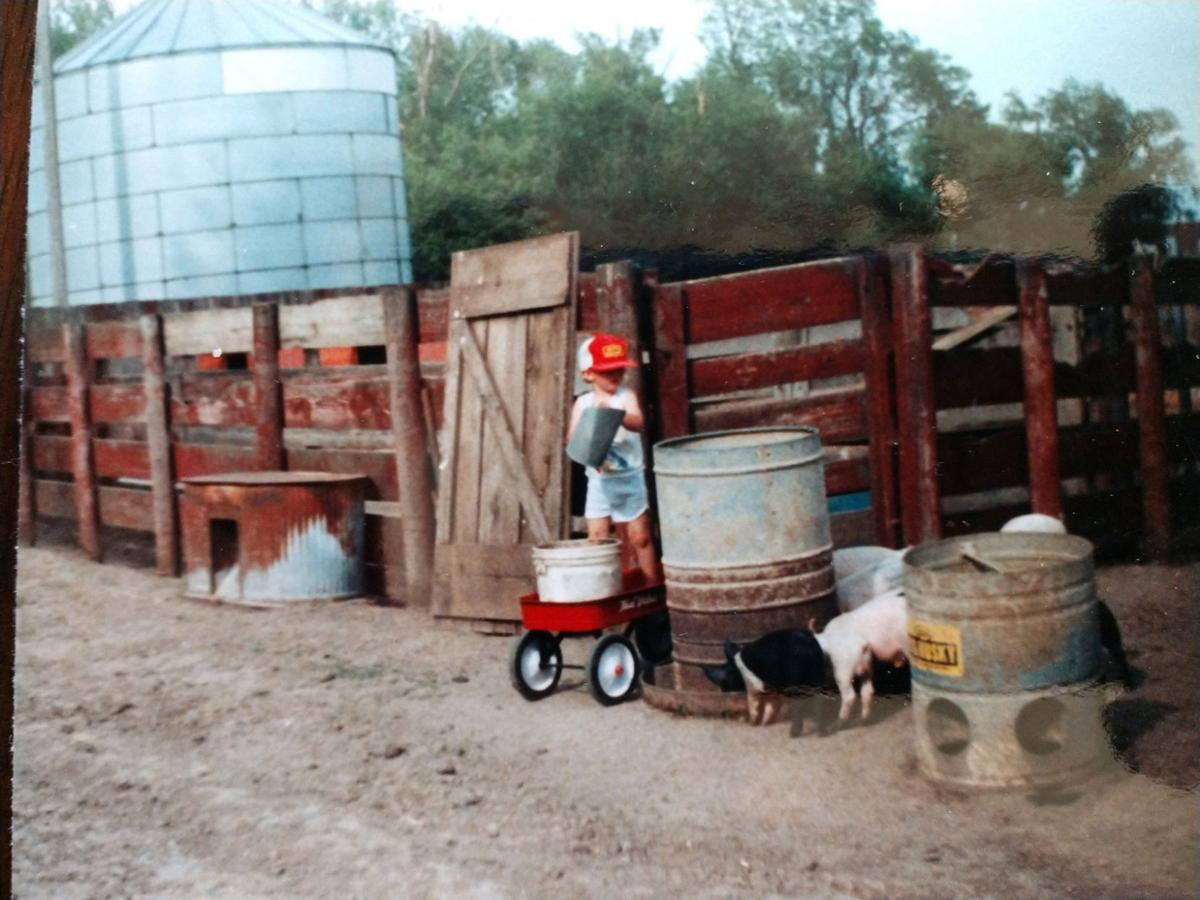 Feeding pigs back in the day