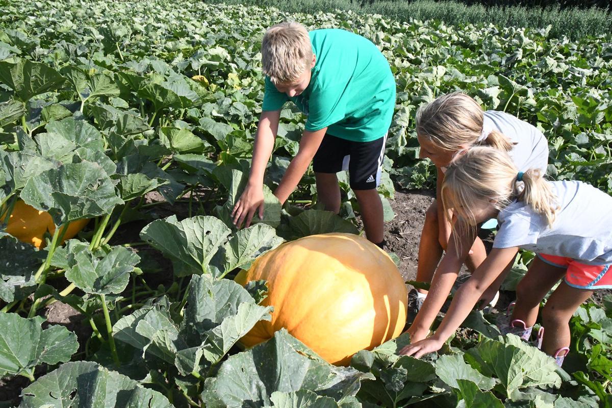 Fields of Fun offers pumpkins