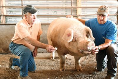 Brutus claims runner-up 'Big Boar' title