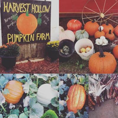 Harvest Hollow