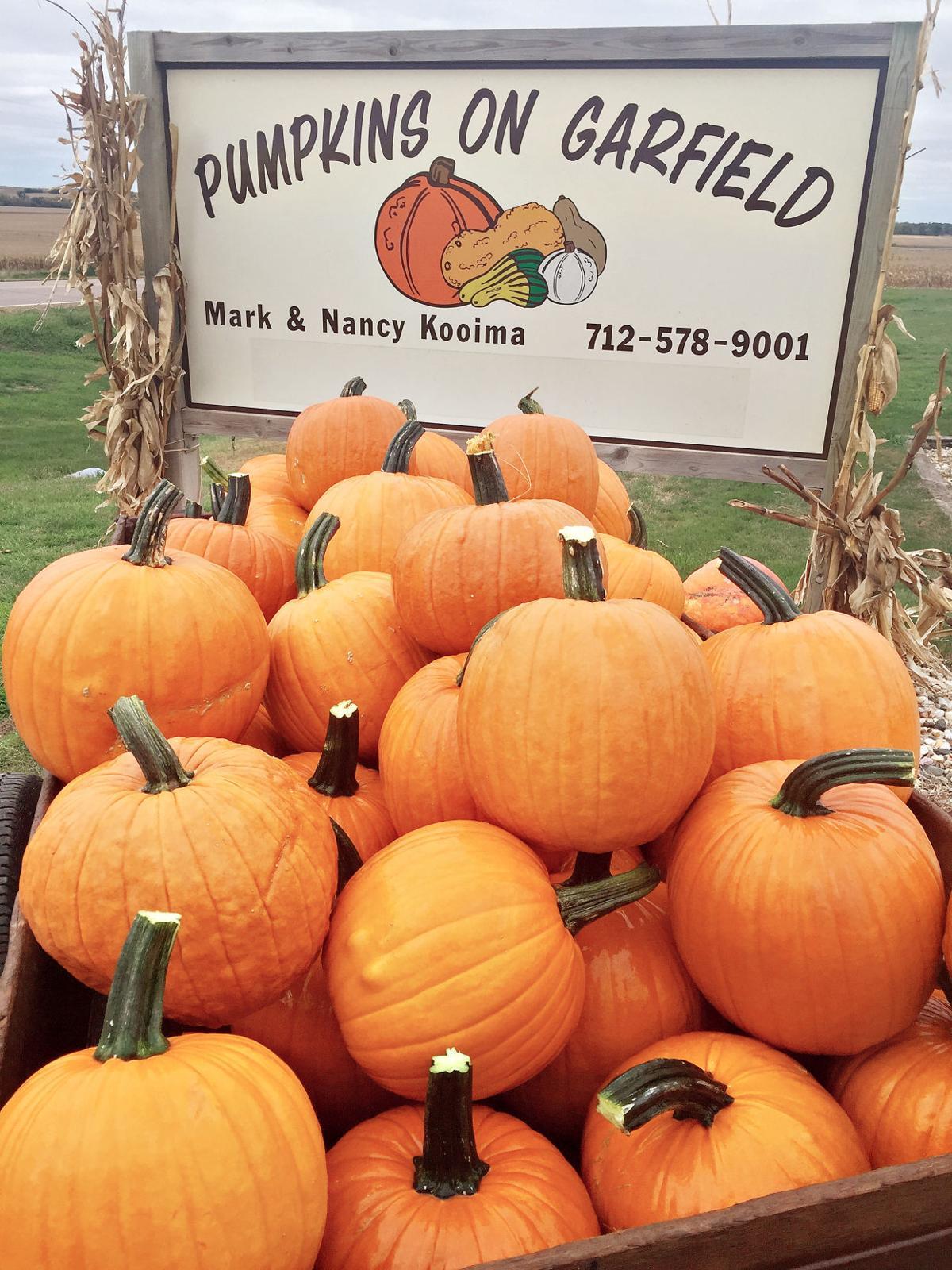 Pumpkins on Garfield 2