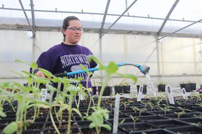 Northwest Horticulture Club offers Healing Garden