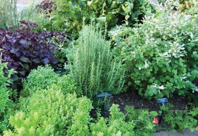 The Garden Guy | Herbs for the Pacific Northwest