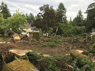 Tree harvest draws ire of Hollywood Hill residents