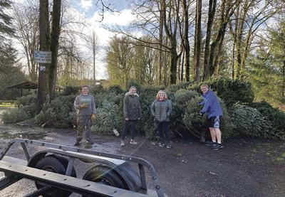 Scouts collect trees from neighborhood doorsteps
