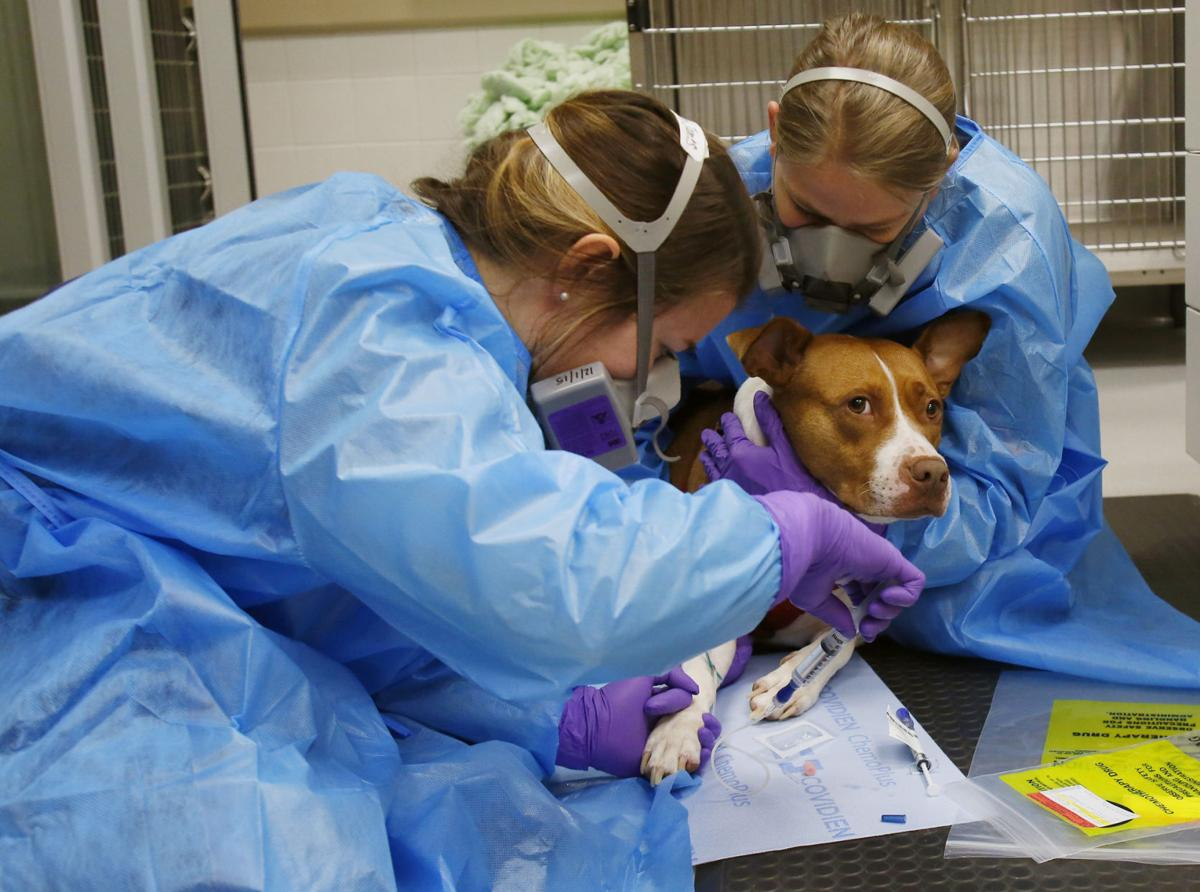 Saving Jayda: AU College of Veterinary Medicine offers rare integrated approach to canine cancer