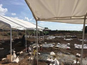 Bodies of 95 black forced-labor prisoners from Jim Crow era unearthed in Sugar Land after one man's quest
