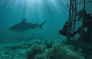 Worth Watching: Beware the 'Sharkcano,' Netflix Samples Latin America 'Street Food,' a 'Real Sports' Roundtable