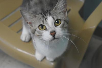 Fostering with LCHS and caring for kittens in your neighborhood