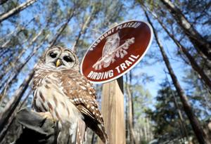 Louise Kreher Forest Ecology Preserve & Nature Center designated as an Alabama Birding Trail
