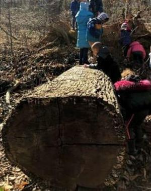 D.C. preschoolers left a note on a fallen tree. When they returned, they couldn't believe what they saw.