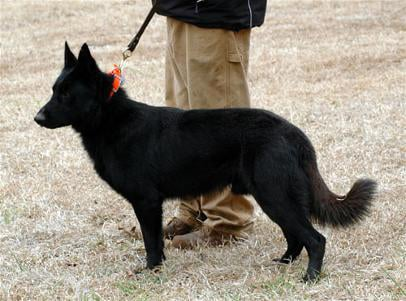 Tuskegee Univ Helps Breeder Dogs After Storm News Oanowcom
