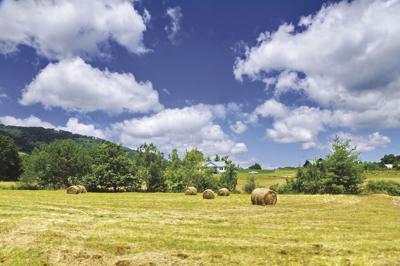 20210321_biz_be local farm.jpg