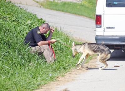 Humane officer