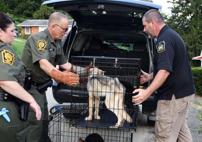 Bentleyville man charged with having wolf hybrids | Local News