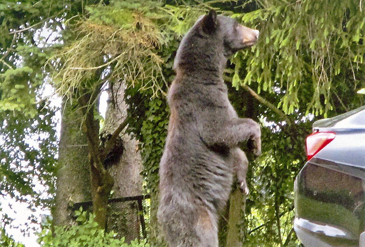 Washington bear one