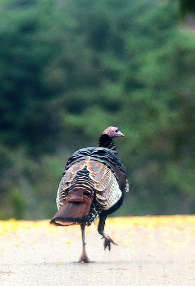 2,000 Turkeys campaign kicks off