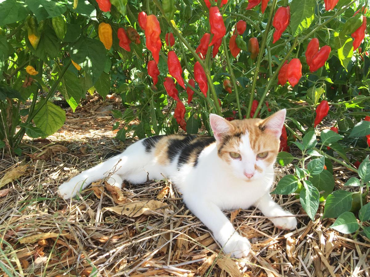 20191009_com_pepper_cat.JPG