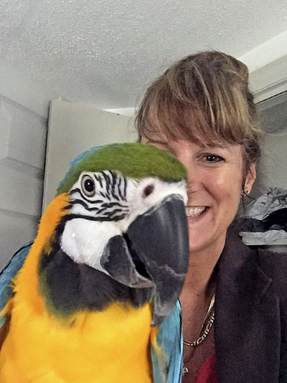 Smoody macaw photo