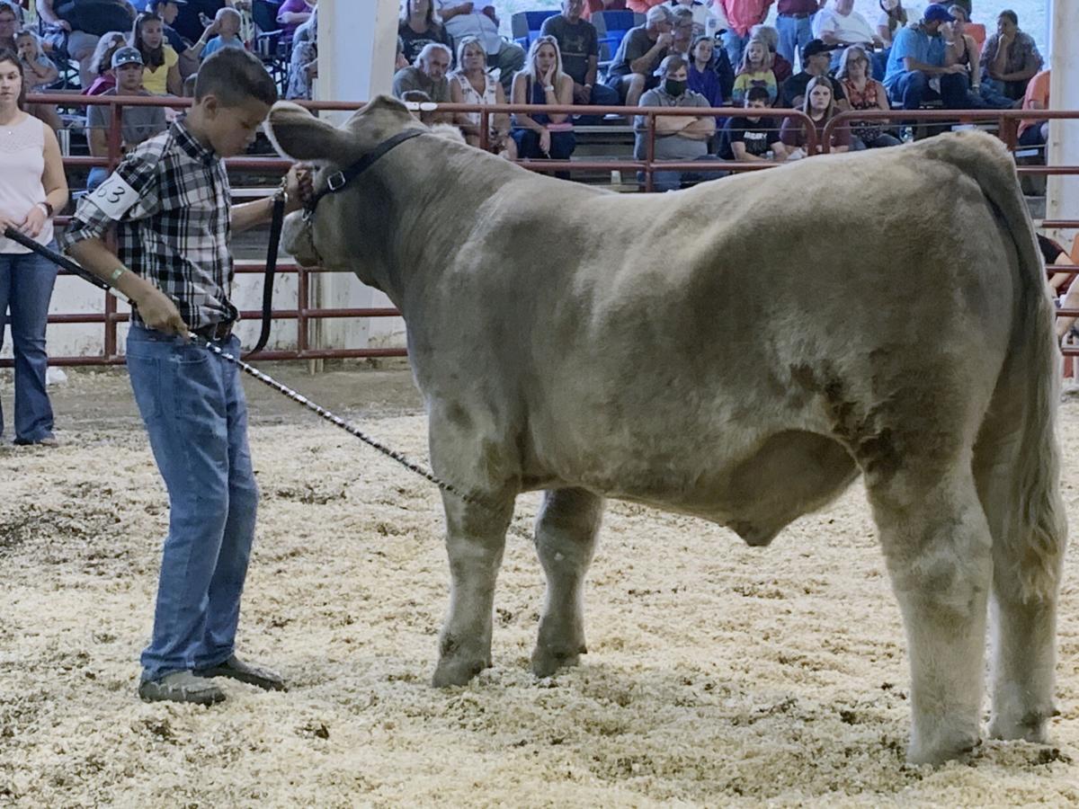 20200824_loc_livestock fair 2.jpg