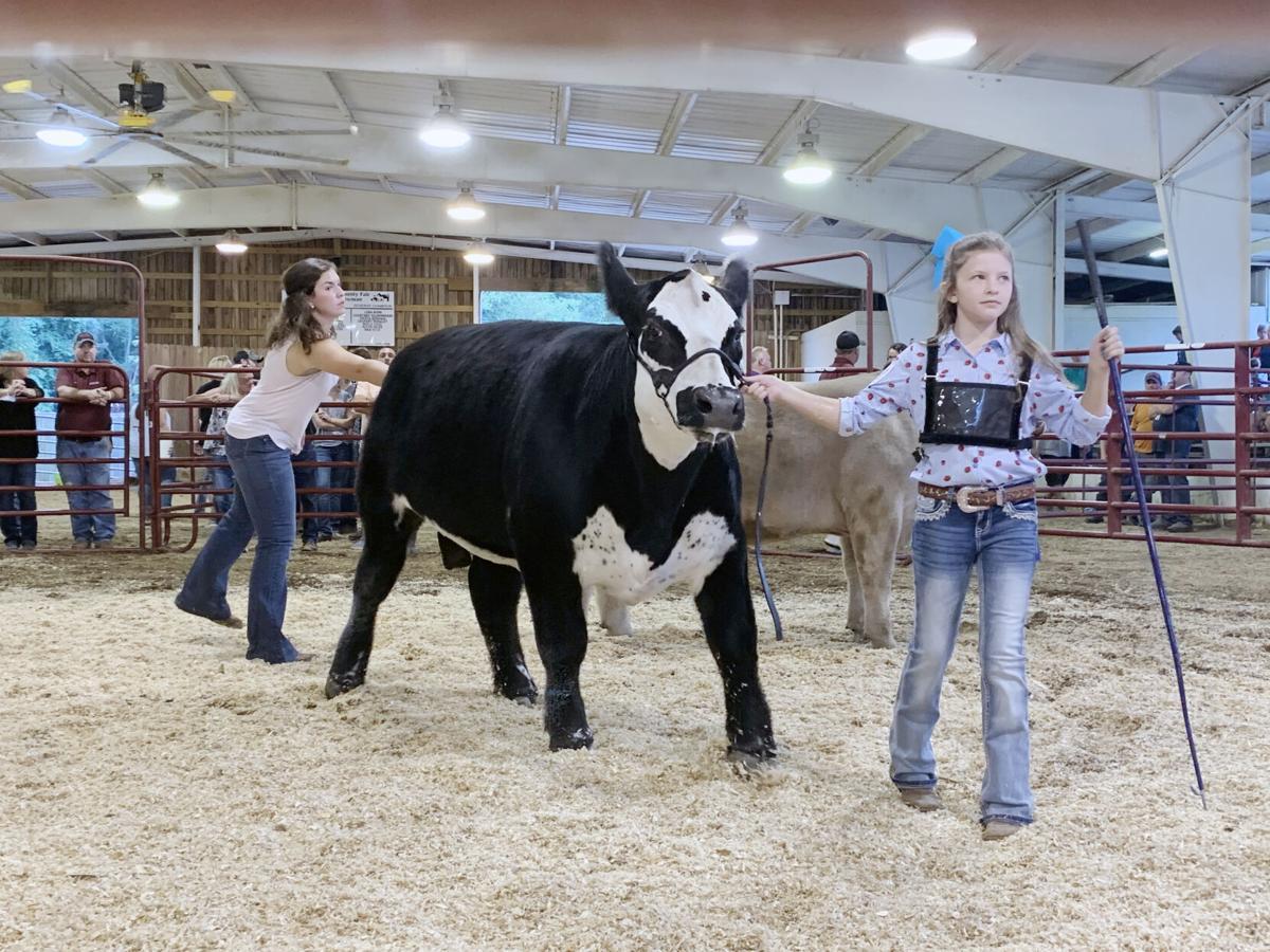 20200824_loc_livestock fair 3.jpg