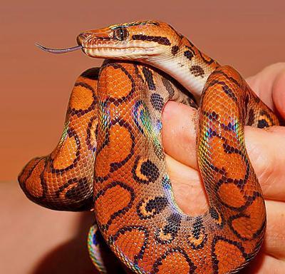 Reptile expo photo