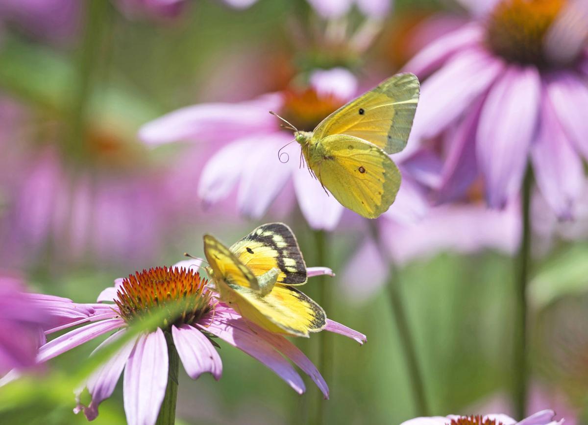 Moth/flower/butterfly