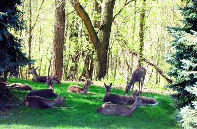 Pa  game commission asked to expand deer hunting | Outdoors
