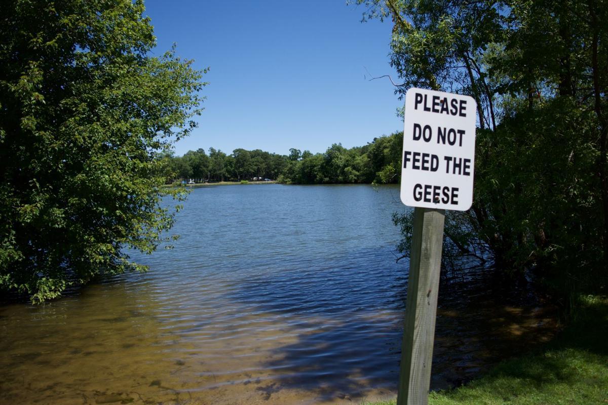 OPA geese missing