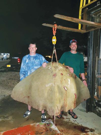 record butterfly ray