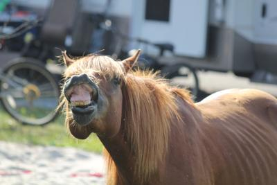 Preventing ponies from eating human food