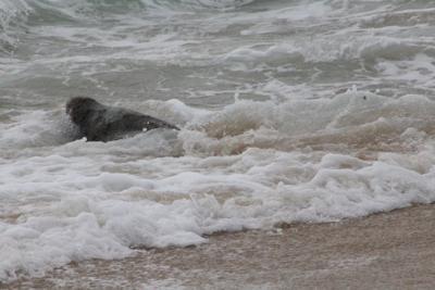 Seal 'Sally Ride' returns to sea