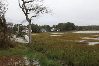 Sinepuxent Bay marshes