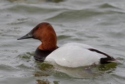 Winter Delmarva Birding Weekend set for Jan. 25-27