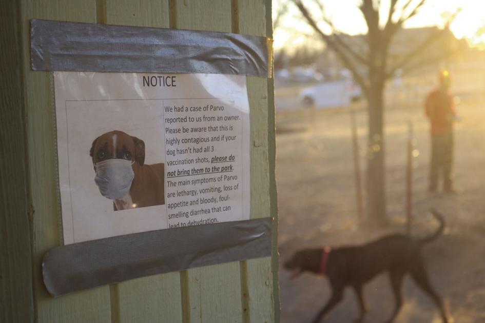 Veterinarios locales dan información sobre los últimos parvo de los casos se encuentra en Stillwater parque del perro de Diario O'Collegian 1