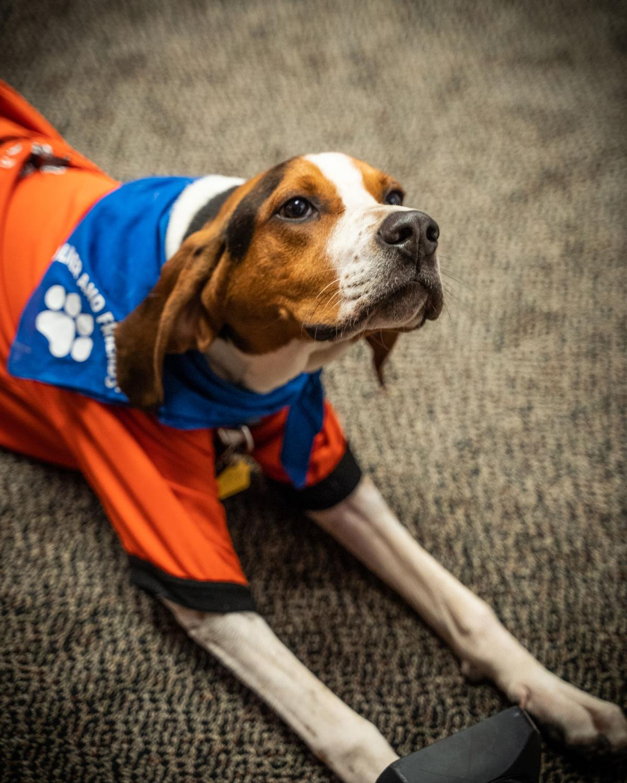 Milo the Dog-1098.jpg