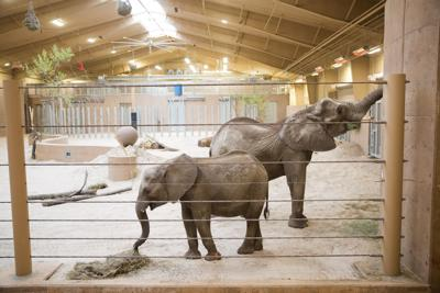 The Omaha zoo animals want your tree branches. Here's how to donate