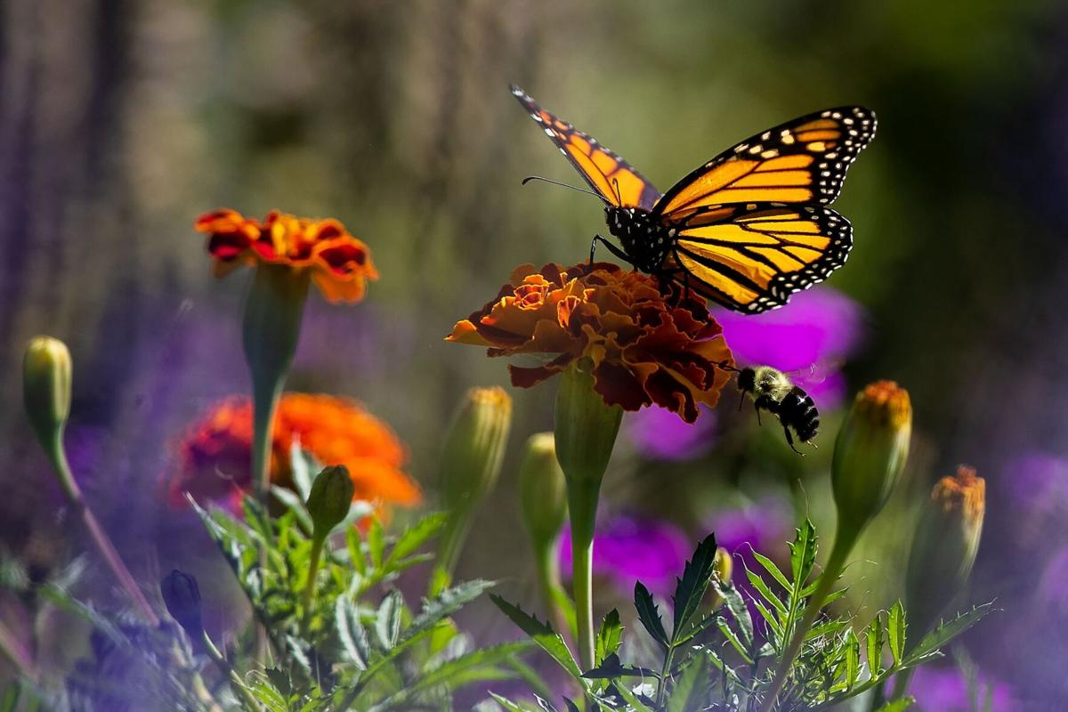 092621-owh-living-pollinatorgarden-pic-cm002