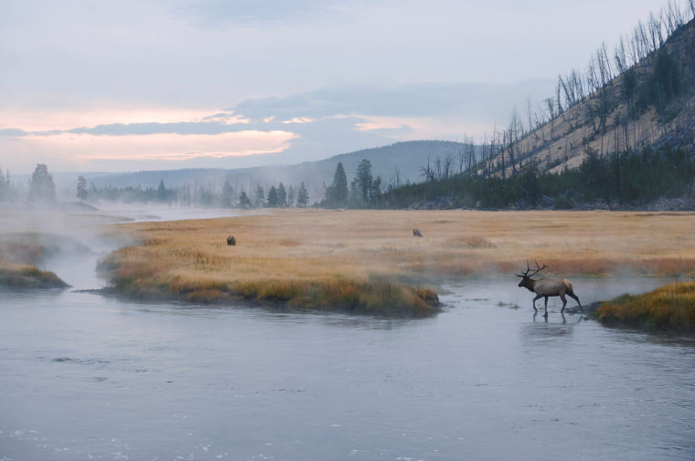 Longtime friends publish book on Yellowstone