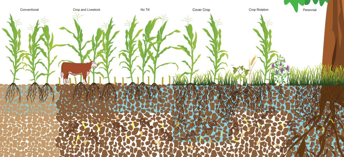 Soil study graphic