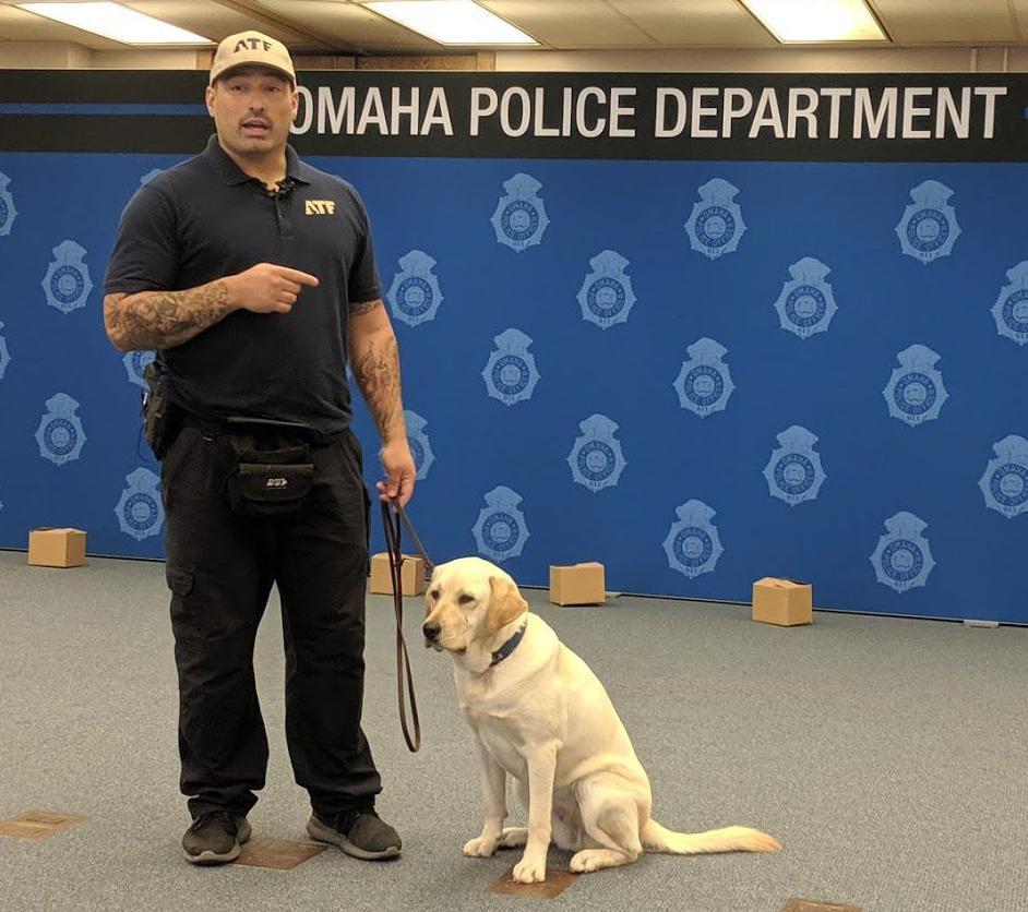 Explosive-detection dog, 8/19