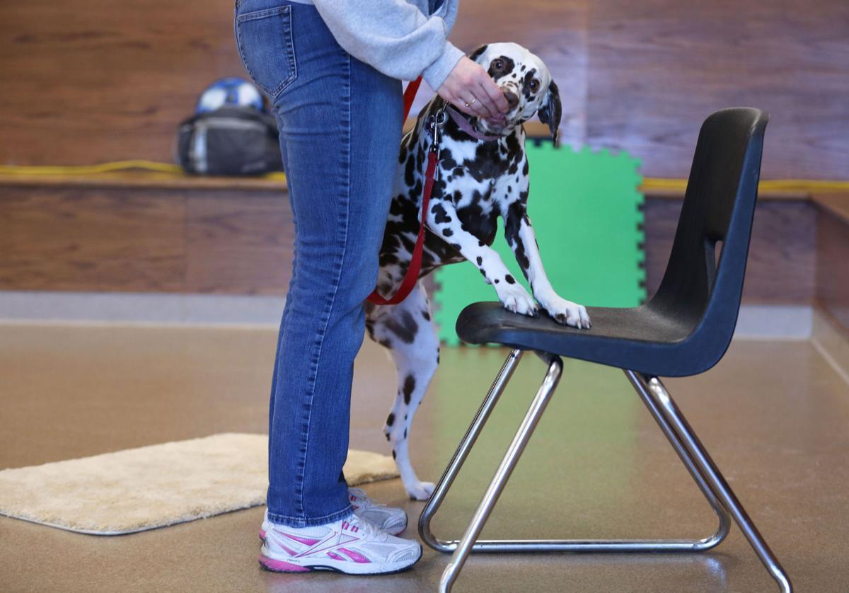 BonaFide Dog Academy