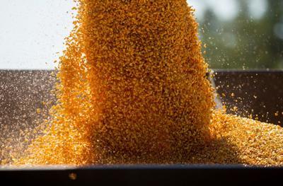 corn harvest teaser