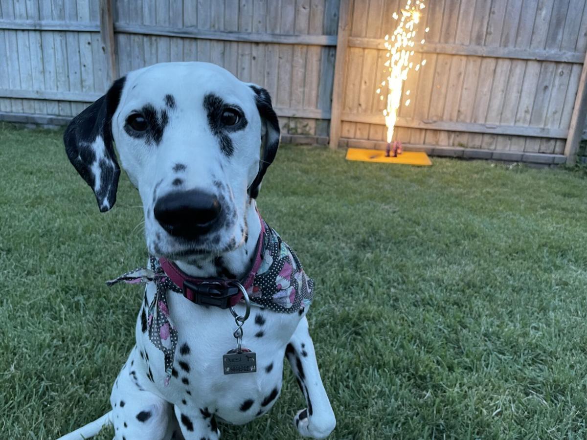 Dog for 6/30/21 (fireworks)