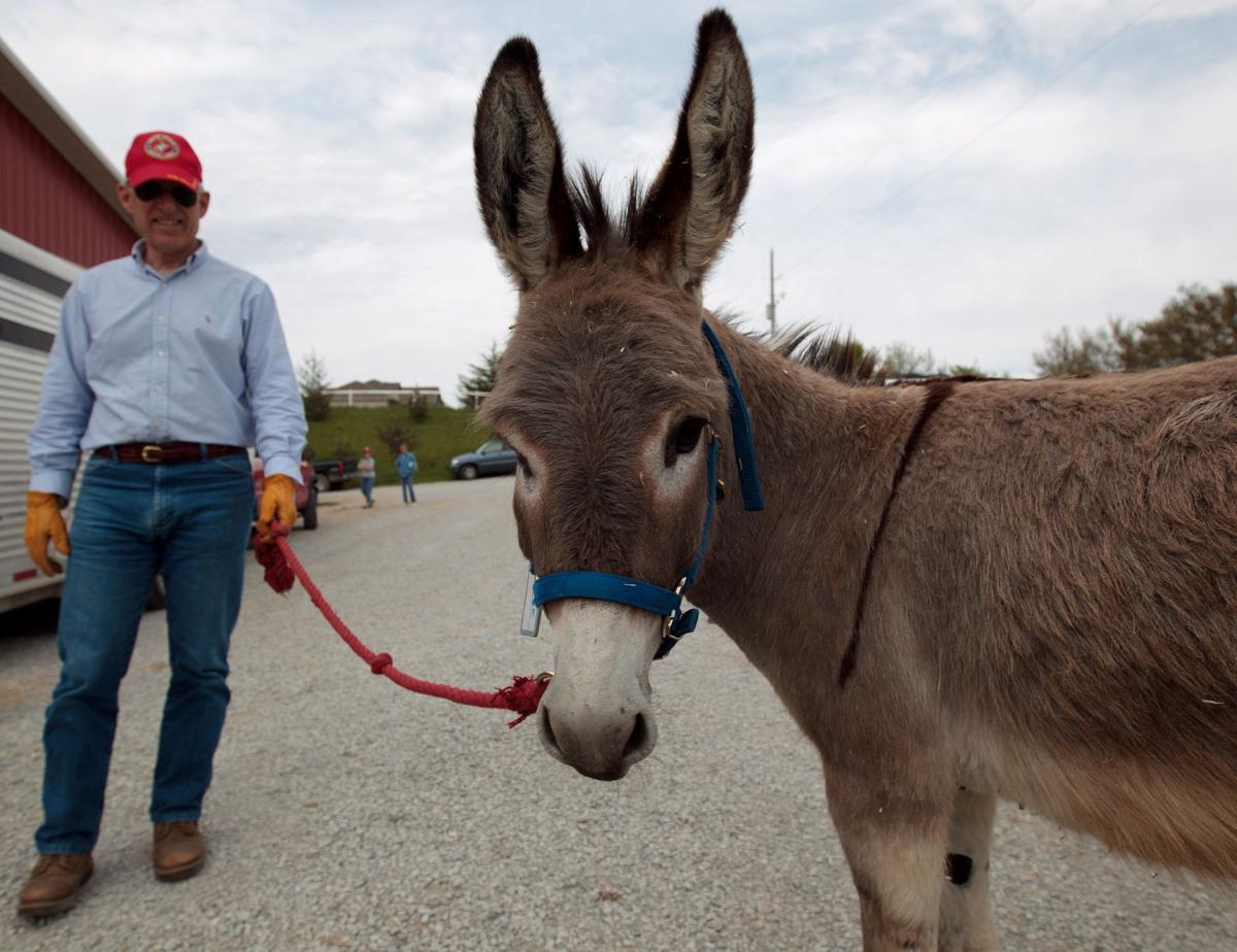 q u0026a a tale of a donkey u0027s journey to america arts omaha com