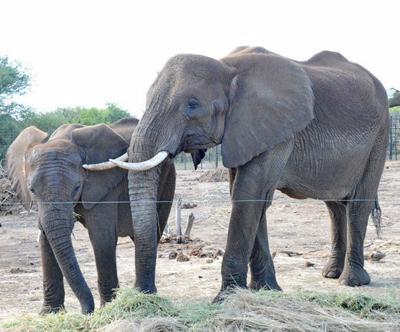 Swazi elephants coming to Omaha