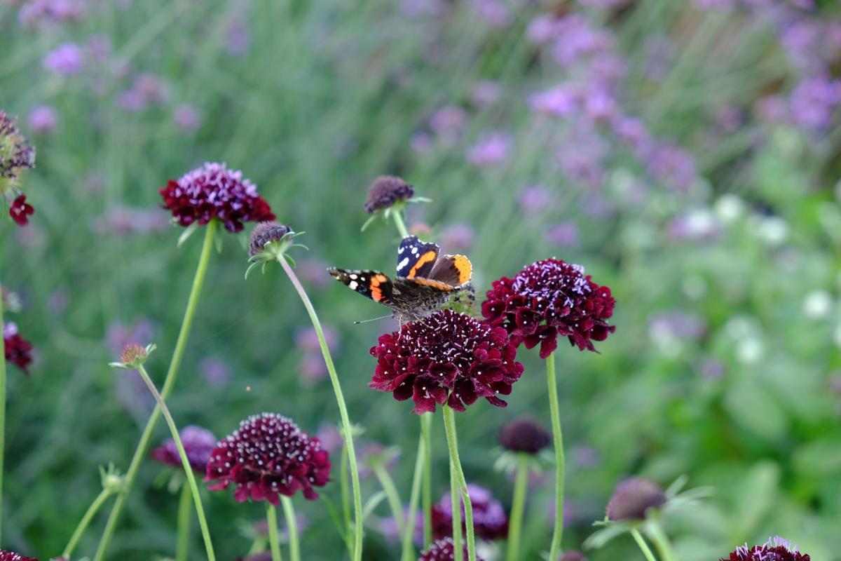 Butterfly_Pincushion_1608.jpg