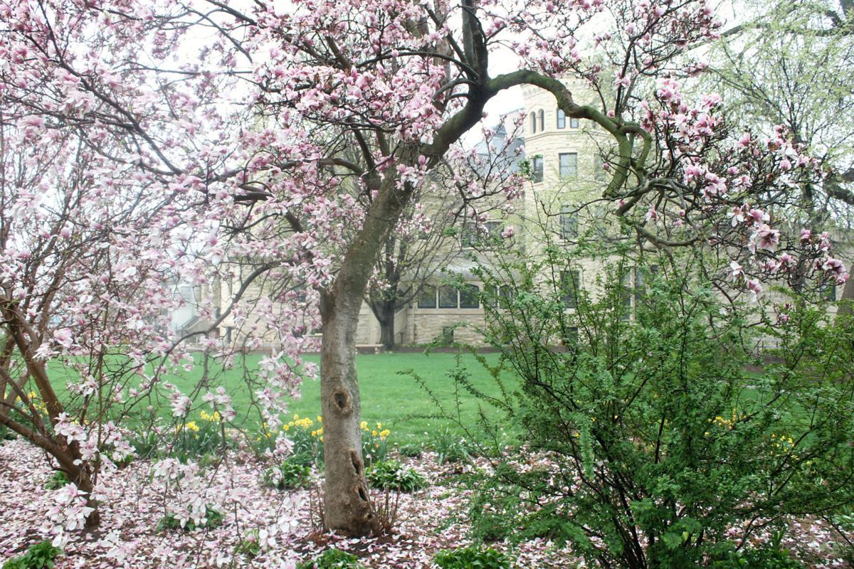 Spring Grounds 1.jpg